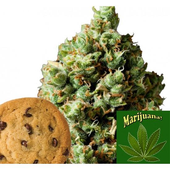 Mad Hatter Cookie Kush - Cannabis Flavour 7 ml